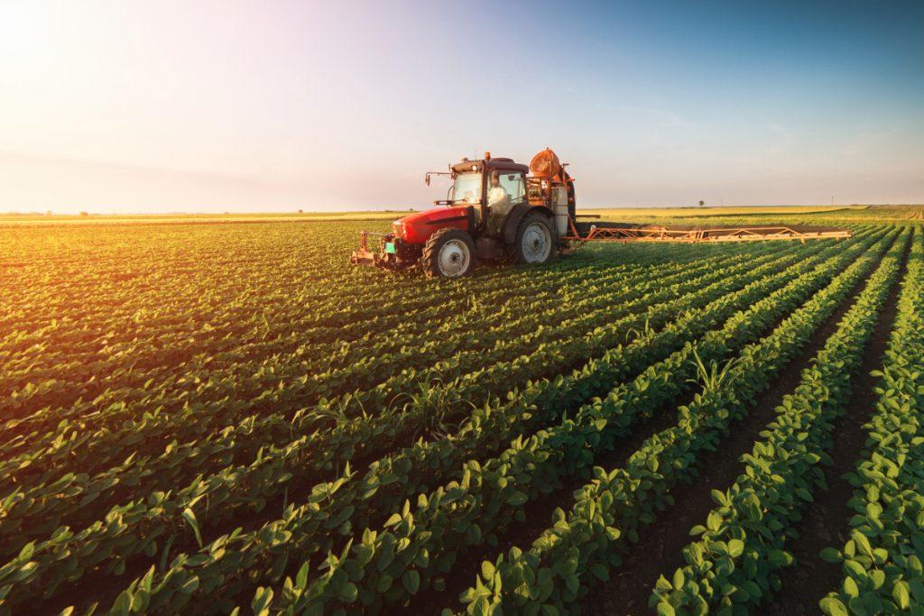 Proizvodnja krumpira se godinama smanjuje